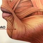 мышца опускающая угол рта