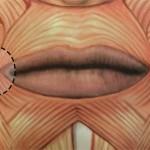 мимические мышцы уголков губ