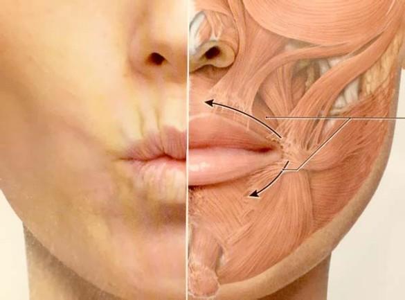 мимические морщины вокруг рта работа круговой мышцы